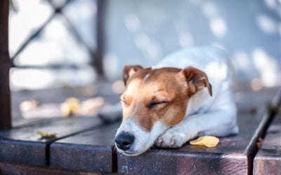 Make Your Deck Safe for Children and Pets